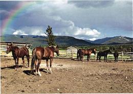 Horses And Rainbow - Paarden