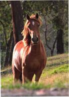 Horse On Land - Paarden