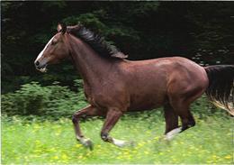 Running Horse - Paarden