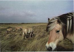 Walking Horses - Chevaux