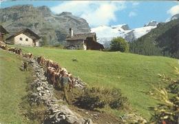 450/FG/20 - ST. JACQUES (AYAS AOSTA) - Ritorno Dal Pascolo - Italia