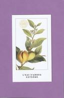 L'ARTISAN PARFUMEUR  ***L'EAU D'AMBRE EXTRÊME *** - Perfume Cards