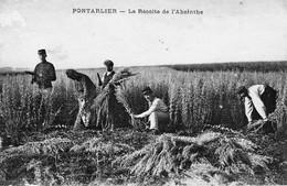 Pontarlier - La Récolte De L'Absinthe. Edition Faivre-Locca. Dos Divisé. Non Circulée. Bon état.. - Pontarlier