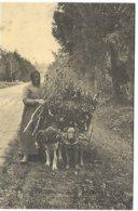 L80A_196 - REPRODUCTION - En Sologne - Attelae De Chiens - France