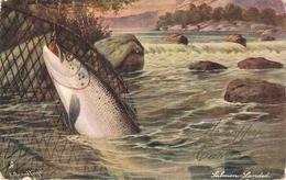 "A. Roland Knight. British Fish. SALMON. LANDED"" Tuck Oilette PC # 1544 - Tuck, Raphael"