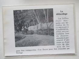 CAMEROUN  - Train Forestier De Transport De Bois Exotique  -  Coupure De Presse De 1953 - Chemin De Fer