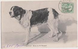 Sp- SUISSE - Chien Du St Bernard - Timbre - Cachet - 1905 - VS Wallis