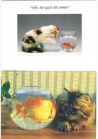 2 Cartes Chat Et Poisson - Cat -katze-  Poes Visbokaal - Gatos