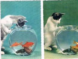 2 Cartes Chat Et Poisson -cat Fish -katze-  Poes Visbokaal - Katten