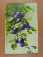 C.Klein Fruits /8/ - Klein, Catharina