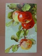 C.Klein Fruits /11/ - Klein, Catharina