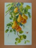 C.Klein Fruits /12/ - Klein, Catharina