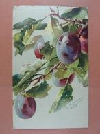 C.Klein Fruits /21/ - Klein, Catharina