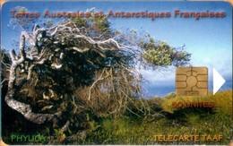 TAAF - TF-STA-0029, Le Phylica, Plants, Tree, 1,500ex, 50 Units, 5/03, Mint? - TAAF - Terres Australes Antarctiques Françaises