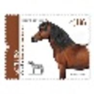 Portugal ** & Autochthonous Breeds Of Portugal,  Garrano Horse, III Grupo 2020 (81684) - Ferme