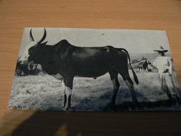 FRANCE/CARTE POSTALE DE MADAGASCAR POUR LA FRANCE - Collections
