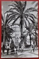 Cpsm Photo PALMA DE MALLORCA Anime Paseo Sagrera Y Lonja - Palma De Mallorca