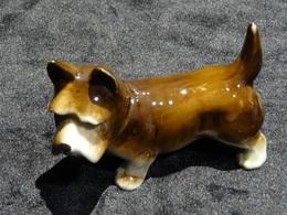 Chien Porcelaine Ancien - Animaux