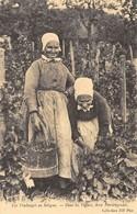 Les Vendanges En Sologne - Dans Les Vignes, Deux Vendangeuses - Cecodi N'115 - Non Classés