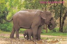 AN 962, MODERN FANTASY  POSTCARD   ELEPHANTS - Éléphants