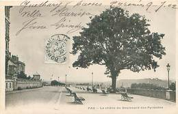 Pau - Le Chene Du Boulevard Des Pyrénées    Q 1222 - Pau