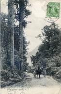 Nouvelle Zélande - West Coast Road - Attelage - Carte Ecrite En Espéranto - Nueva Zelanda