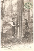 Dépt 40 - Résinier - (pin Des Landes, Résine) - F. Bernède, Phot., Arjuzanx (environs De Morcenx, LANDES) - France