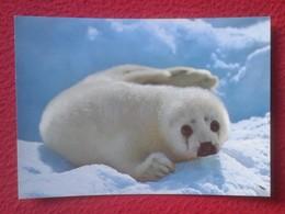 POSTAL POST CARD NORUEGA NORGE NORWAY SELUNGE HARP SEAL PUP CACHORRO DE FOCA EN LA NIEVE ANIMAL VER FOTO Y DESCRIPCIÓN.. - Noruega