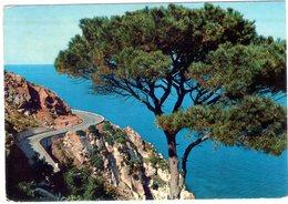 Isola D'Elba. Litorale Di Marciano Marina. VG. - Italia