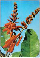Carte Postale Afrique Haute Volta  Erythrine  Trés Beau Plan - Cartes Postales