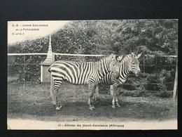 CPA Jardin Zoologique De La Pataudière Zèbres Du Haut Zambèze - Zèbres