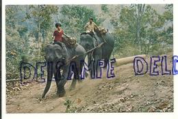 Elephants Au Travail. Forest Of Chiengmai. North Thailand - Éléphants