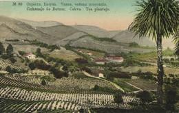 Georgia Russia, BATUMI BATUM BATOUM, Tea Plantation (1910s) Postcard - Géorgie