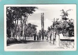 Small Old Post Card Of Pamplemousses Botanical Garden,Mauritius,S100. - Mauritius