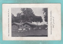 Small Old Post Card Of Sabre-Horned Oryx,Giza Zoological Gardens,Giza, Egypt.,S100. - Gizeh