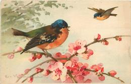 KLEIN Catharina (illustrateur) - Couple D'oiseaux.(carte Vendue En L'état). - Klein, Catharina