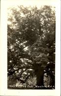 MANTUA  The Mantua Oak - United States