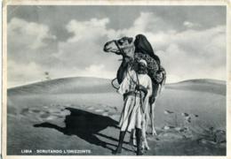 LIBYA  LIBIA  Scrutando L'Orizzonte  Libico Con Cammello Nel Deserto  Annullo XII° Ufficio Postale Concentramento - Libia