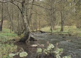 AK55 Woodland With River - Flores, Plantas & Arboles