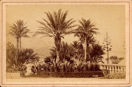Genova, Genoa, Parque Palmeras, Celestino Degoix, Cabinet Format - Anciennes (Av. 1900)