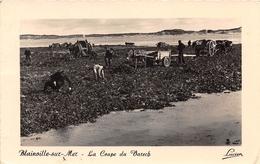 BLAINVILLE SUR MER - La Coupe Du Varech - Blainville Sur Mer