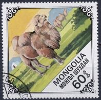Mongolie - Mongolei - Mongolia 1978 Y&T N°987 - Michel N°1185 (o) - 20m Chamelle Et Son Petit - Mongolie