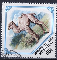 Mongolie - Mongolei - Mongolia 1982 Y&T N°1187 - Michel N°1483 (o) - 50m Chamelon - Mongolie