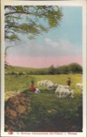 D87 - ENVIRONS D'EYMOUTIERS - PÂTURAGE - Personne Et Enfant Près D'un Troupeau De Moutons - Carte Colorisée - Zonder Classificatie