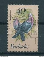 1982 Barbados Birds,oiseaux,vögel 40 Cent Used/gebruikt/oblitere - Barbades (1966-...)