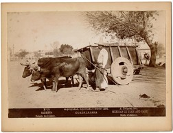 1896 - Mexico - Guadalajara - Mexican Ox Team And Cart - State Of Jalisco - Carreta N° 15 - Foto A. Briquet - 2 Scans - Foto