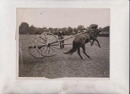 THE WILD HORSE OF RATHFARNHAM    21*16CM Fonds Victor FORBIN 1864-1947 - Profesiones