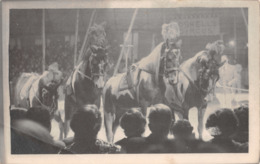 R299087 Oswell Circus. Horse. Postcard - Cartes Postales