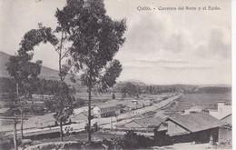 EQUATEUR(QUITO) ARBRE - Equateur