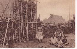 FIDJI(TYPE) NUE - Fiji